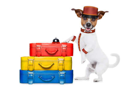 doorkeeper: jack russell bellboy dog with stack of luggage at hotel, where pets are welcome and allowed,isolated on white background