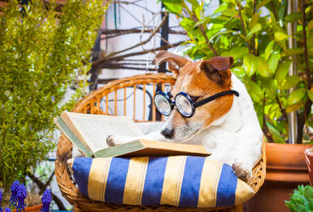 couch potato: jack russell dog reading his favorite book,surrounded by green plants , relaxing and sitting on a lounger or deck chair outside