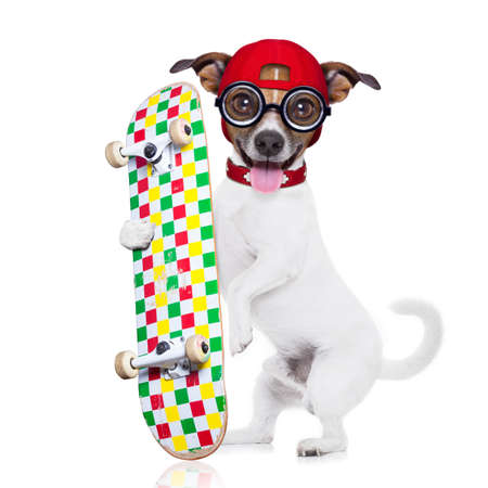 skateboard shoes: jack russell skater dog with red cap ready to play, holding skateboard, isolated on white background
