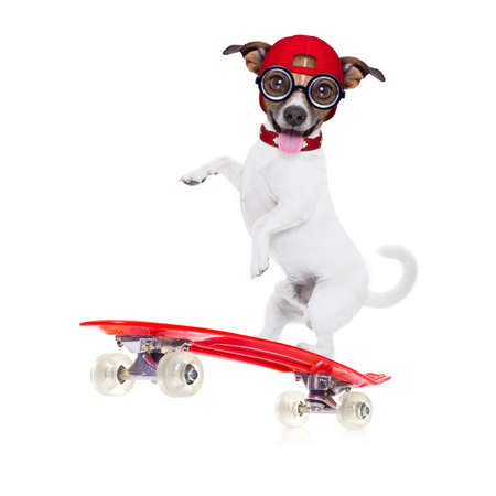 skateboard shoes: jack russell skater dog with red cap ready to play, balancing on red  skateboard, isolated on white background Stock Photo
