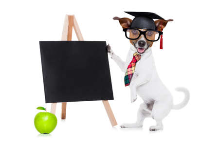 jack russell dog as school teacher , graduated , holding a blackboard beside a green apple, isolated on white background