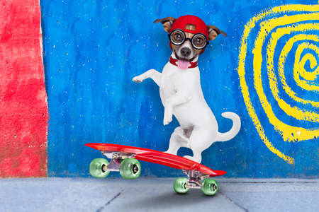 pet  animal: jack russell skater dog with red cap ready to play, balancing on red  skateboard, behind a wall with colors on the street outdoors Stock Photo