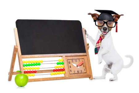 graduation suit: jack russell dog as school teacher , graduated , holding a blackboard beside a green apple, isolated on white background
