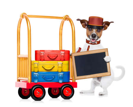 jack russell dog pushing a hotel Luggage Cart or trolley full of luggage and bags, ready to check in , in a pet friendly hotel, holding an empty blank blackboard , isolated on white background photo