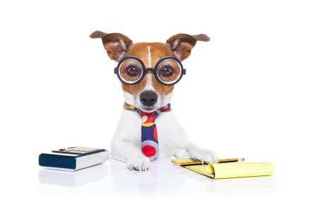 ジャック ラッセルの秘書会計士犬電卓、メモ帳の横にある鉛筆と白い背景で隔離