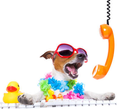 holiday pets: jack russell dog booking summer vacation holidays online using a pc computer keyboard, while shooting on the phone very loud ,wearing sunglasses and a flower chain , isolated on white background Stock Photo