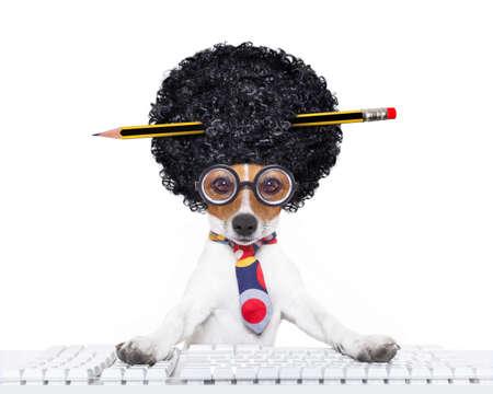 secretaria: jack russell secretaria perro reservar una reserva en l�nea usando un teclado de ordenador port�til de la PC, con una locura peluca afro tonto, l�piz en el pelo, aislado en fondo blanco