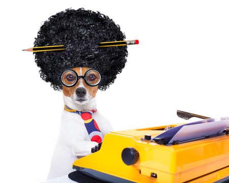 jack russell secretaresse hond te typen op een schrijfmachine toetsenbord, geïsoleerd op een witte achtergrond, het dragen van een gekke afro pruik Stockfoto