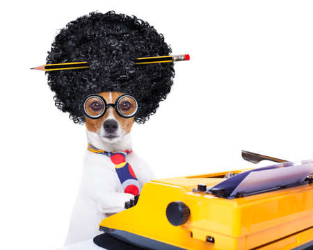 authors: jack russell secretary dog typing on a typewriter keyboard  , isolated on white background, wearing a crazy afro wig Stock Photo