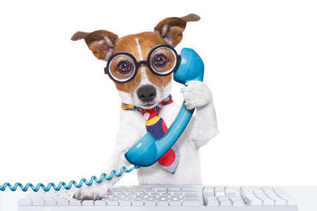 phone isolated: jack russell dog on  a call center using the phone or telephone and computer pc  keyboard , isolated on white background Stock Photo