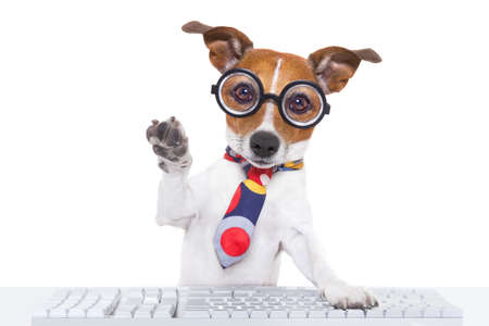 types of glasses: jack russell dog booking a reservation online using a pc computer laptop keyboard ,with high five paw ,isolated on white background Stock Photo