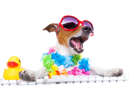 jack russell dog booking summer vacation holidays online using a pc computer keyboard, wearing sunglasses and a flower chain , isolated on white background photo