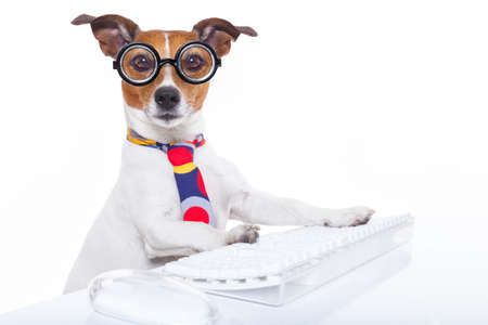 funny glasses: jack russell  secretary dog booking a reservation online using a pc computer laptop keyboard , isolated on white background