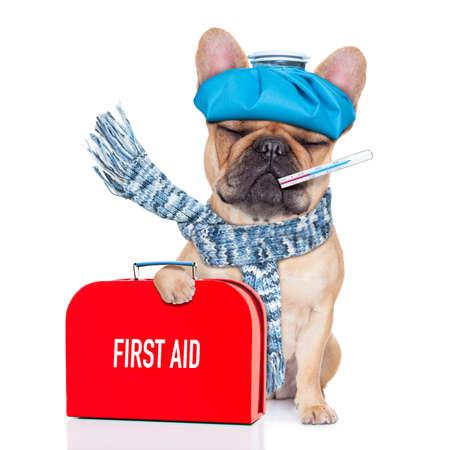 francouzský buldoček pes s bolestí hlavy a kocovinou s pytlík s ledem, nebo ledový obklad na hlavu, teploměrem v ústech s horečkou, držící lékárničku, oči zavřené a utrpení, izolovaných na bílém pozadí