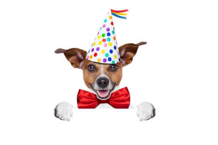sorpresa: jack russell perro como una sorpresa, detrás de la pancarta o cartel blanco y en blanco, que llevaba corbata roja y sombrero de partido, aislado en fondo blanco