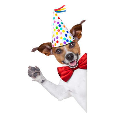 jack russell dog  as a surprise, behind white and blank banner or placard ,wearing  red tie and party hat  , isolated on white background photo