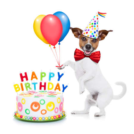 holiday pets: jack russell dog  as a surprise with  happy birthday cake ,wearing  red tie and party hat ,holding balloons , isolated on white background Stock Photo