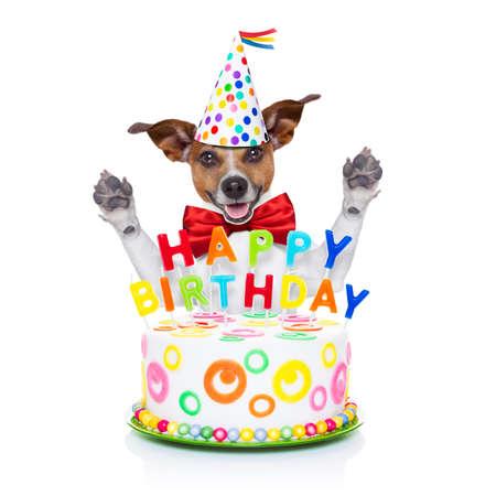 compleanno: cane jack russell come una sorpresa dietro torta di compleanno felice con le candele, indossando cravatta rossa e cappello di partito, isolato su sfondo bianco