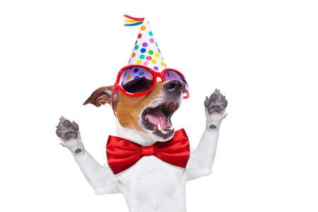 perros graciosos: jack russell perro como una sorpresa, cantando canción de cumpleaños, vestido con corbata roja y sombrero de partido, aislado en fondo blanco