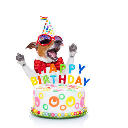 jack russell dog  as a surprise, singing birthday song  ,behind funny cake,  wearing  red tie and party hat  , isolated on white background Archivio Fotografico