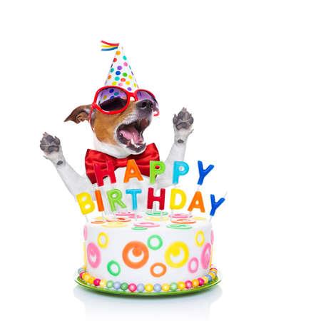 gateau anniversaire: jack russell chien comme une surprise, chanson d'anniversaire chant, derri�re g�teau dr�le, portant cravate rouge et chapeau de f�te, isol� sur fond blanc