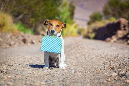 marcheur: jack russell chien abandonné et laissé tout seul sur la route ou de la rue, avec des bagages sac ou une valise, suppliant de venir à la maison des propriétaires
