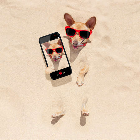 chihuahua dog  buried in the sand at the beach on summer vacation holidays , taking a selfie, wearing red sunglasses