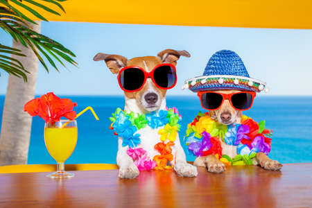 holiday pets: funny cool couple of  dogs drinking cocktails at the bar in a  beach club party with ocean view on summer vacation holidays
