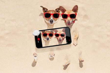 fun: couple of two dogs buried in the sand at the beach on summer vacation holidays , having fun taking a selfie with smartphone