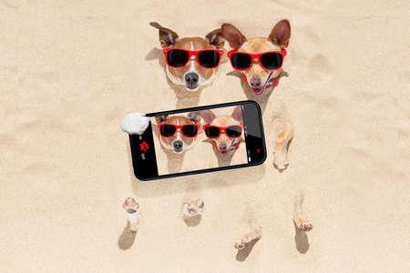 Paar von zwei Hunden im Sand am Strand auf Sommerferien Urlaub begraben, Spaß haben, die ein Smartphone mit selfie