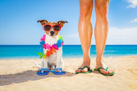 犬と夏の休暇休日、海海岸に近いビーチにぴったりと寄り添って座っての所有者