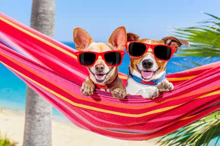 Pares de dois cães que relaxa em uma rede vermelho extravagante com óculos de sol em férias de férias de verão na praia sob a palmeira