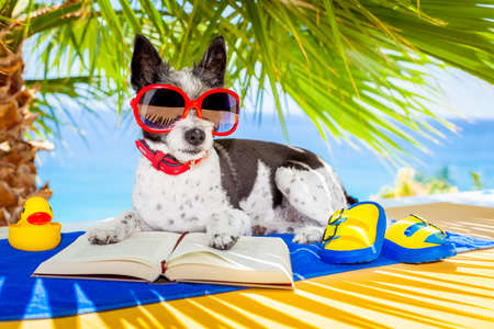 reading a book: terrier dog reading a book and relaxing under the palm at the beach , enjoying the summer vacation holidays Stock Photo
