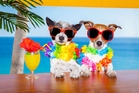 funny cool couple of  dogs drinking cocktails at the bar in a  beach club party with ocean view on summer vacation holidays for honeymoon trip Standard-Bild