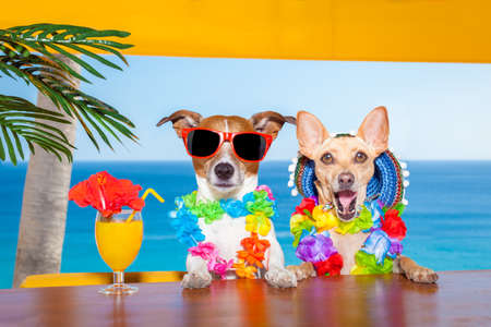 funny cool couple of  dogs drinking cocktails at the bar in a  beach club party with ocean view on summer vacation holidays. Stock Photo