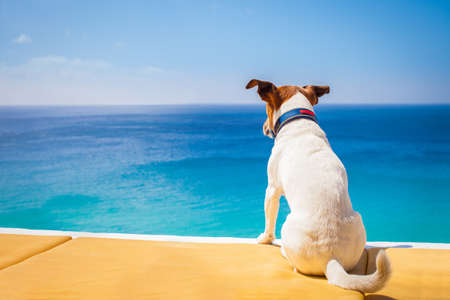 dogs sitting: dog watching the summer vacation view on the beach, thinking about life