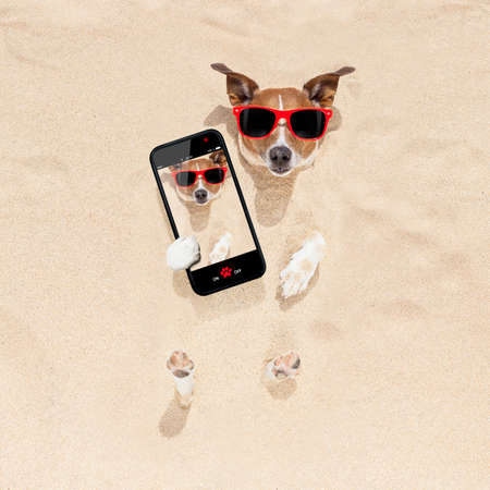 embed: jack russell dog  buried in the sand at the beach on summer vacation holidays , taking a selfie, wearing red sunglasses