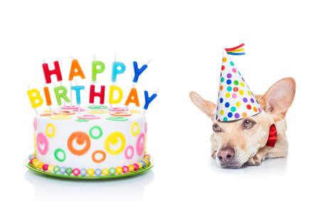 treats: chihuahua hambriento de una torta de cumpleaños feliz con velas, vestido con corbata roja y sombrero de partido, aislado en fondo blanco