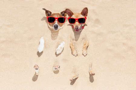 perros graciosos: par de dos perros enterrados en la arena en la playa en las vacaciones de vacaciones de verano, divertirse y disfrutar, con gafas de sol rojas Foto de archivo