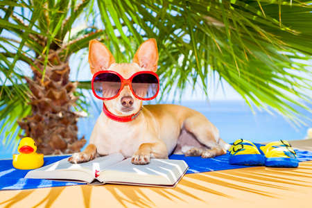 dog summer: chihuahua dog reading a book and relaxing under the palm at the beach , enjoying the summer vacation holidays