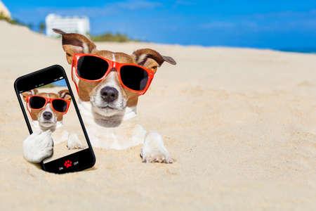 Jack Russell cão enterrado na areia na praia em férias das férias de verão, tomando um selfie, vestindo óculos de sol vermelhos Imagens