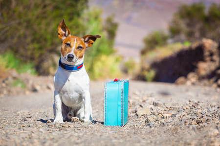 prázdniny: Jack Russell pes opuštěn a sám na silnici nebo na ulici, se zavazadlovým tašce nebo kufru, prosit, aby přišel domů vlastníkům
