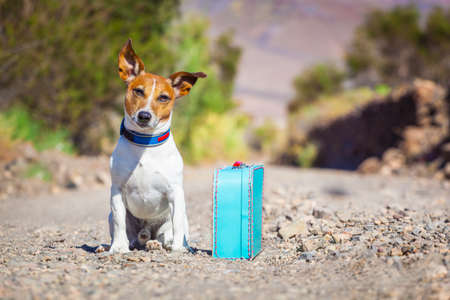 Jack Russell pes opuštěn a sám na silnici nebo na ulici, se zavazadlovým tašce nebo kufru, prosit, aby přišel domů vlastníkům