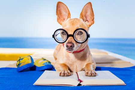 perros graciosos: chihuahua leyendo un libro y relajarse bajo la palma en la playa, disfrutando de las vacaciones de vacaciones de verano