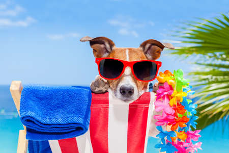 jack russell dog relaxing on a fancy red  hammock with sunglasses in summer vacation holidays at the beach under the palm tree