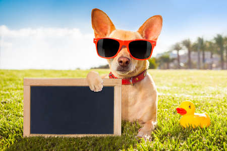enjoy space: chihuahua dog  relaxing and resting , lying on grass or meadow at city park on summer vacation holidays, holding a blank  empty placard and blackboard, yellow rubber duck as best friend