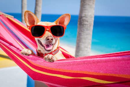 vacaciones en la playa: chihuahua que se relaja en una hamaca roja de lujo con gafas de sol en días de fiesta de vacaciones de verano en la playa bajo la palmera