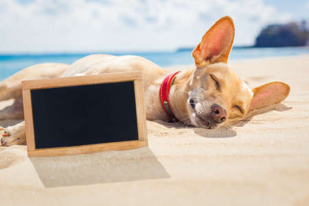pizarron: perro chihuahua relajarse y descansar tumbado en la arena en la playa en las vacaciones de vacaciones de verano en blanco y vacío pancarta pizarra o banner enterrada en la arena Foto de archivo