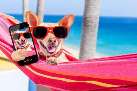 여름 휴가 휴일, selfie을 가지고 친구들과 재미를 공유하는 멋진 빨간색 해먹에서 휴식 치와와 강아지