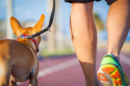erziehung: Chihuahua Hund eng zusammen, um Eigentümer zu Fuß mit Leine draußen im Park als Freunde Lizenzfreie Bilder
